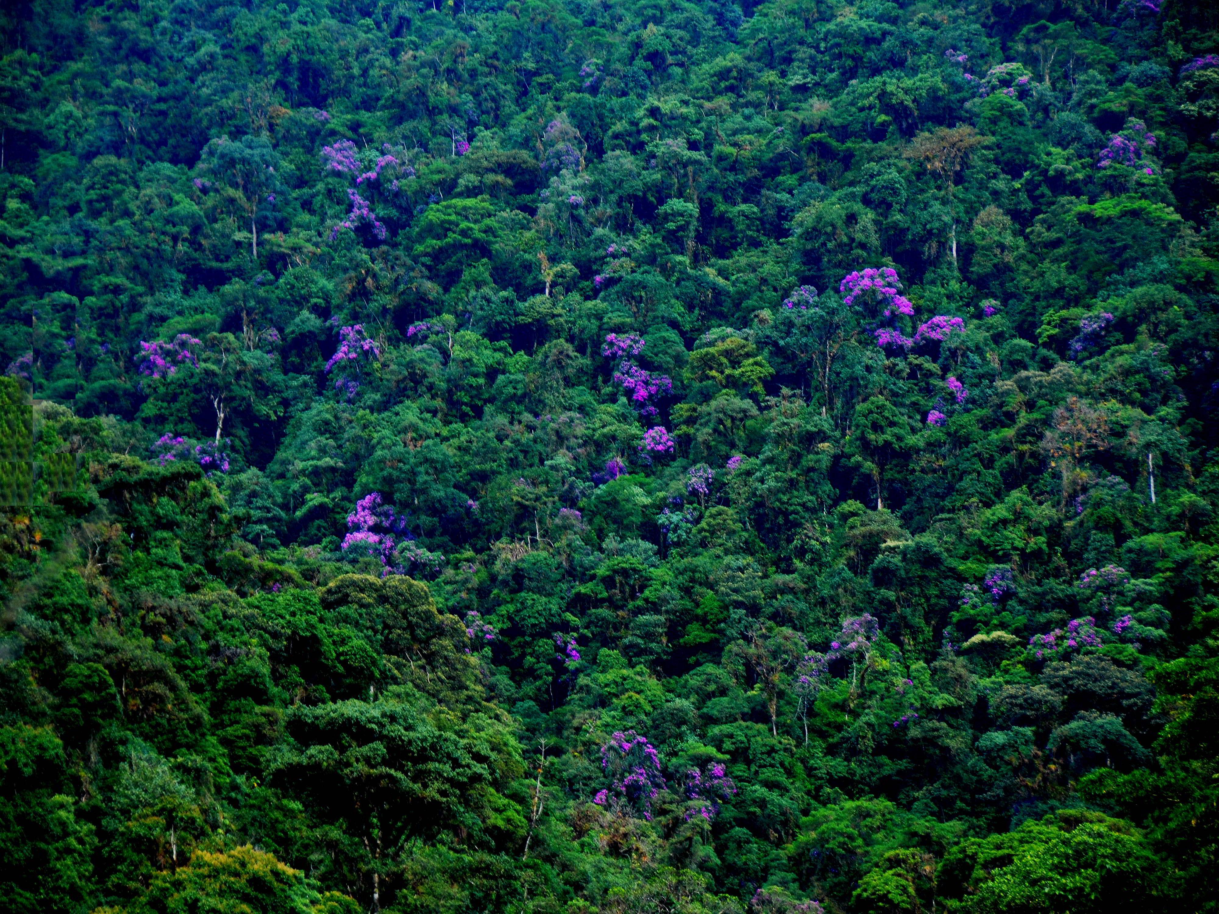AMAZONAS REGENWALD LODGE, ECUADOR