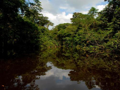 6 BESTE REISEN CUYABENO NATURSCHUTZGEBIET / NATURRESERVAT: the Imuyo River is the clearest black water river in the Amazon of Ecuador.