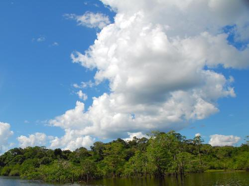BEST BEST ECUADOR TRAVEL [CUYABENO TOURS]: extended swamps characterize the forest.