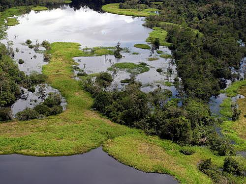 Cuyabeno Fauna Reserve Ecuador: Seasonal floating meadows in Cuyabeno, Lagarto Cocha.