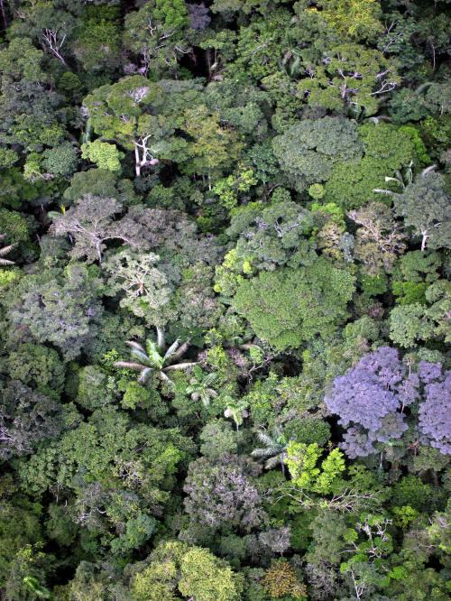 Cuyabeno Fauna Reserve Ecuador: Amazon jungle seen from the air.