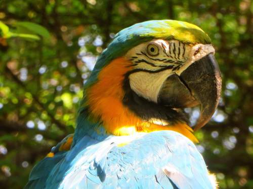 6 BESTE REISEN CUYABENO WILDSCHUTZGEBIET: Blue and Yellow Macaw at Cuyabeno Wildlife Reserve