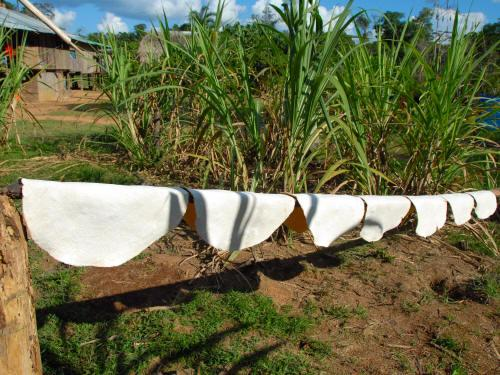 COFAN TRIBE HISTORY: Manioc tortillas drying in the sun.